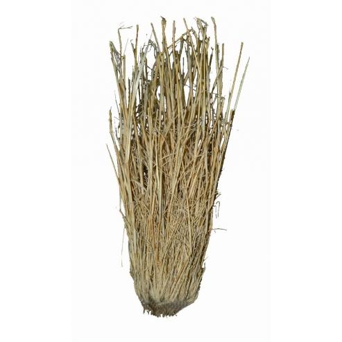 Lucky Reptile Grass Bushes