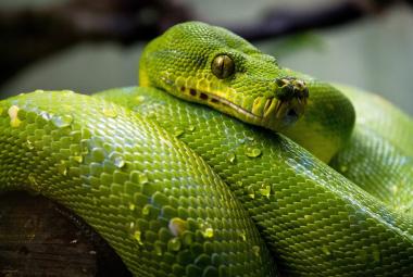 Hadi užovkovití