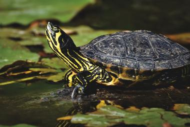 Vodní želvy