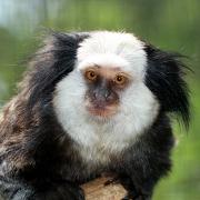 Pro drápkaté opičky