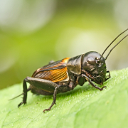 Pro krmný hmyz