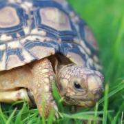 Pro želvy