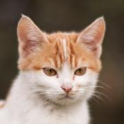 NEKTON - kočky