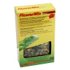 Lucky Reptile Flower Mix
