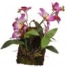 Lucky Reptile Jungle Plants kvetoucí