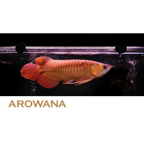 Arcadia Arowana Lamps - zářivky