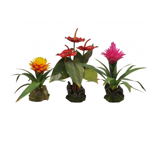 Kvetoucí Lucky Reptile Jungle Plants