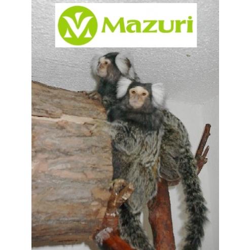 Mazuri Marmoset Mini Marex 1kg