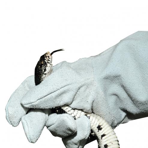 Ochranné rukavice Lucky Reptile