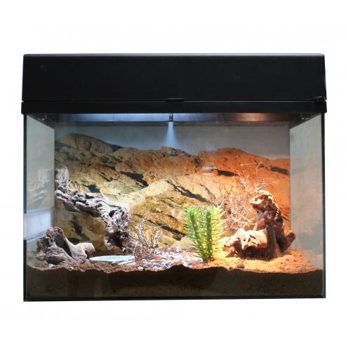 Lucky Reptile Starter Kit Desert Gecko