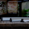 Arcadia Jungle Dawn LED Bar